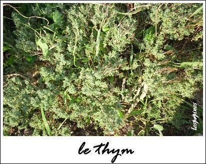 info lzxceb Cultiver les plantes aromatiques.